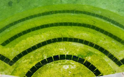 How to get rid of Mustard Algae in Swimming Pools